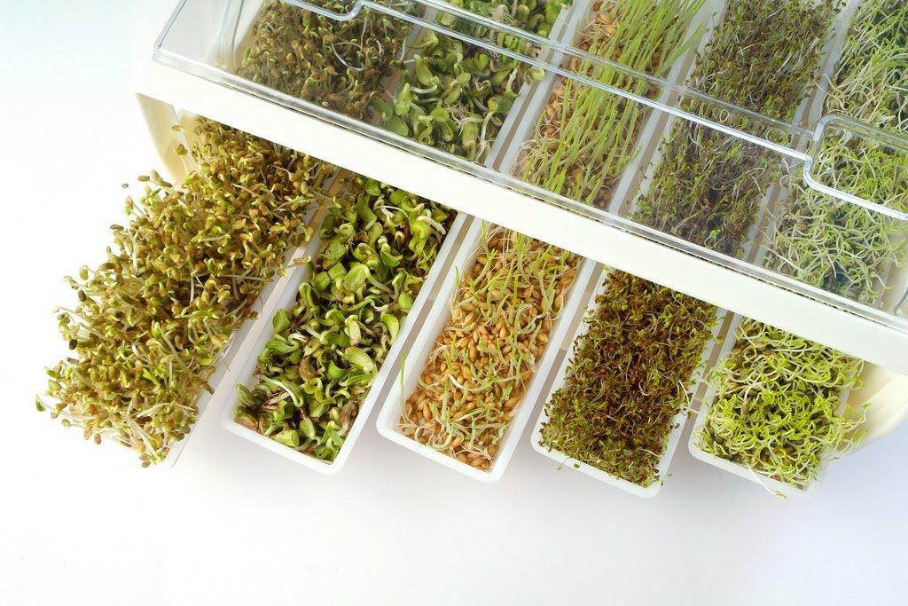 Image result for germinados semillas