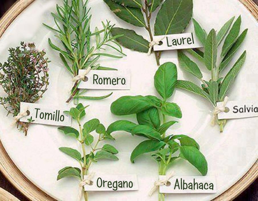 Plantas arom ticas y sus propiedades barcelona alternativa for Planta decorativa con propiedades medicinales crucigrama