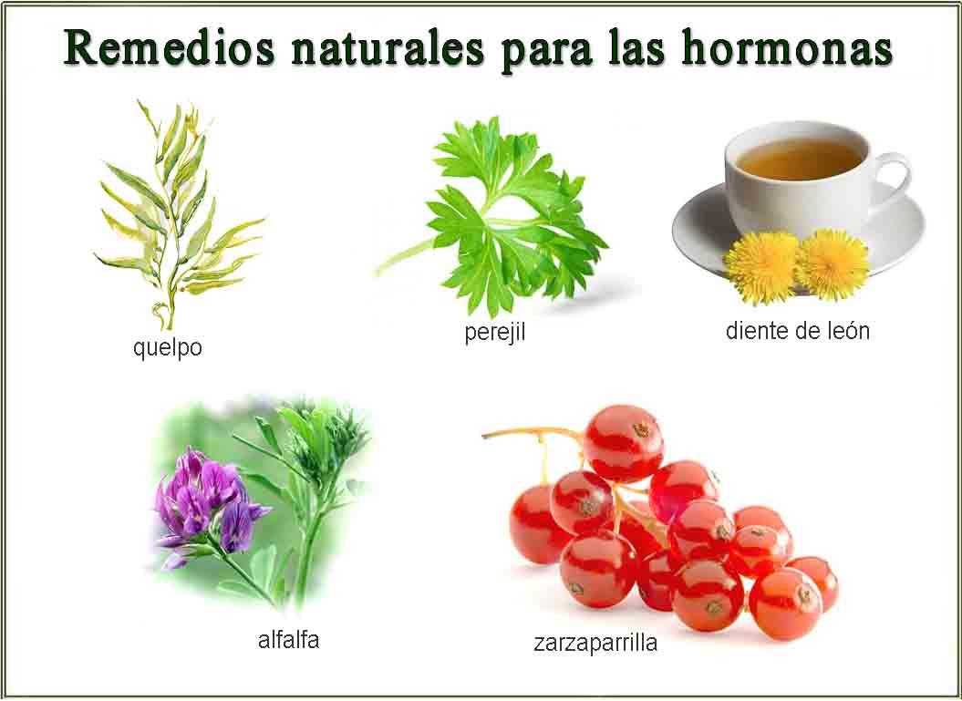 Remedios naturales para regular las hormonas barcelona for Hormonas en las plantas