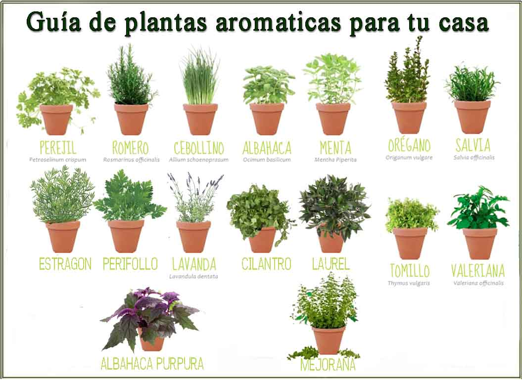 Gu a de plantas aromaticas barcelona alternativa for Semillas suculentas chile