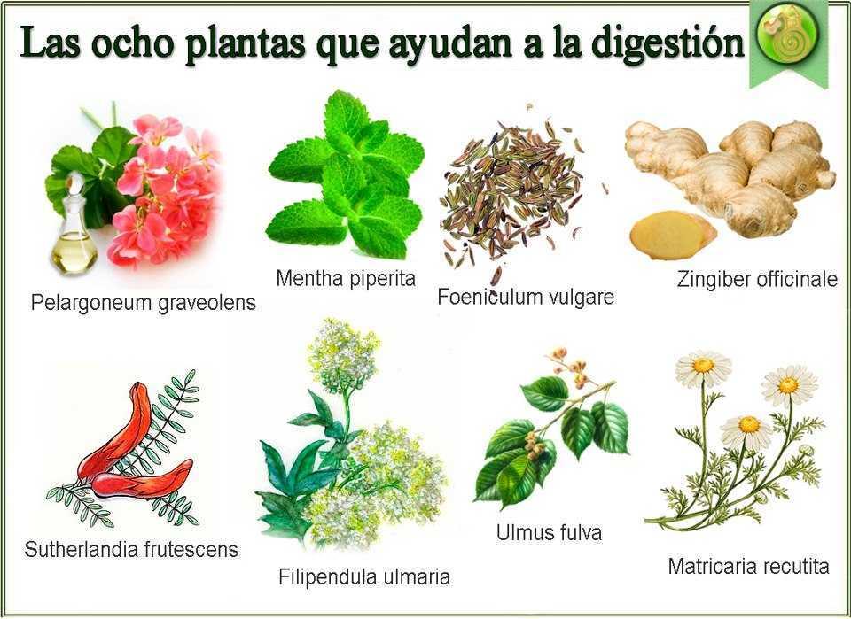 8 plantas para la digesti n remedios naturales for Frutas ornamentales