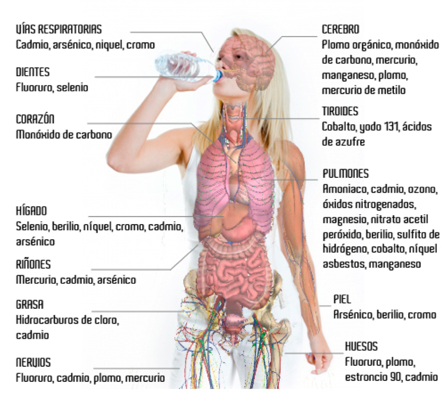 Las toxinas en nuestro cuerpo - Barcelona Alternativa