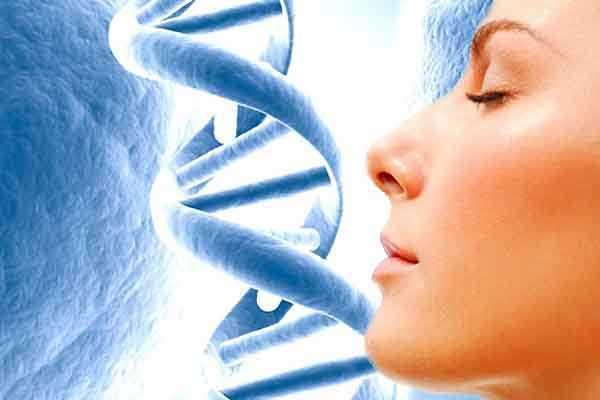 Resultado de imagen para regeneracion de tejidos