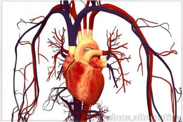 fortalecer tus vasos sanguíneos