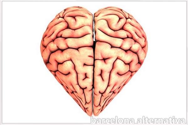 Los sentimientos no se generan en el corazón, sino en el cerebro